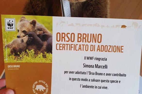 orso-bruno-adottato